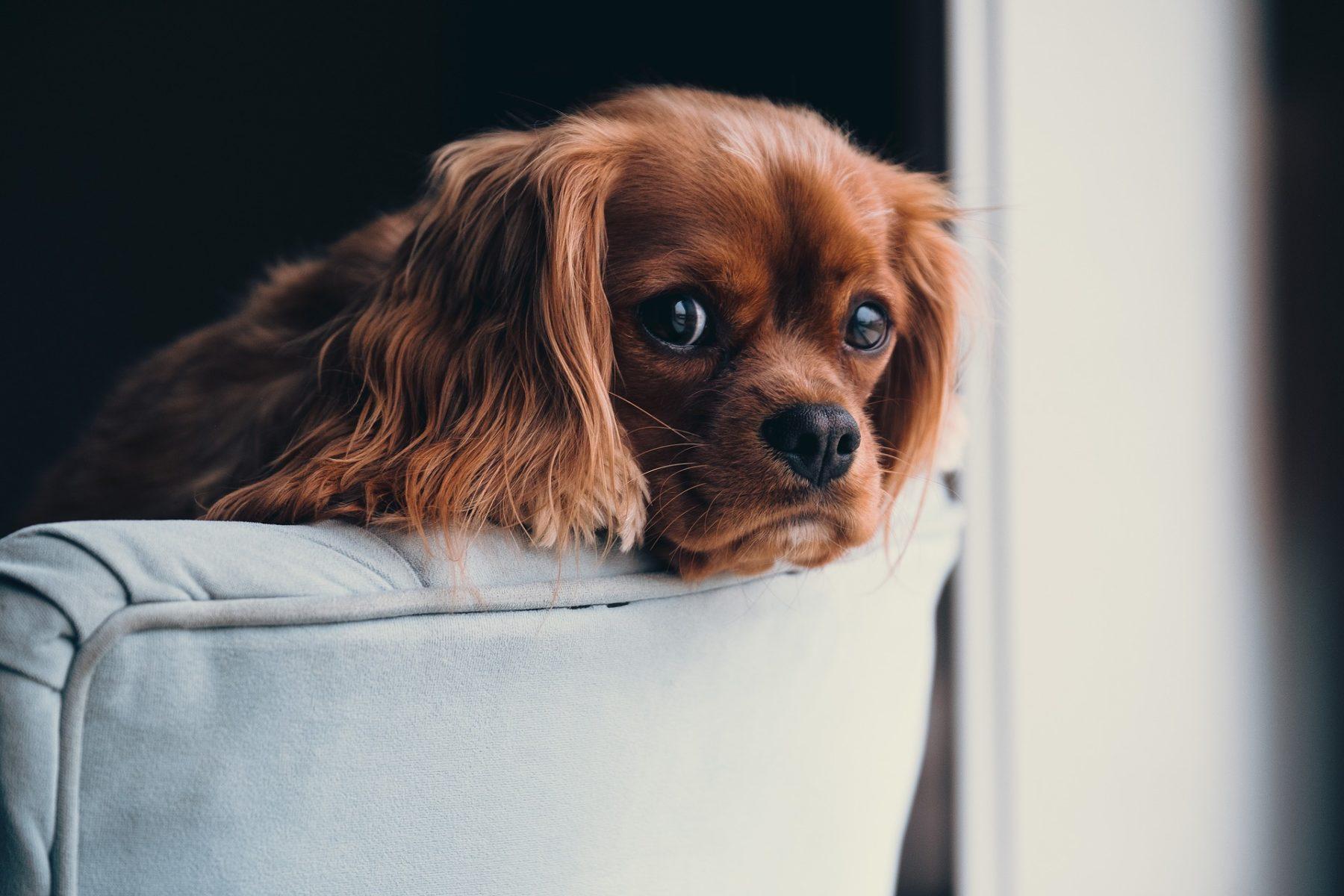 photo-puppy | good apartment dog breeds | Vita Apartment Locators Denver, Seattle